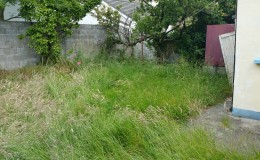 Wilderness back garden in Bray