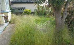 Wilderness in Bray