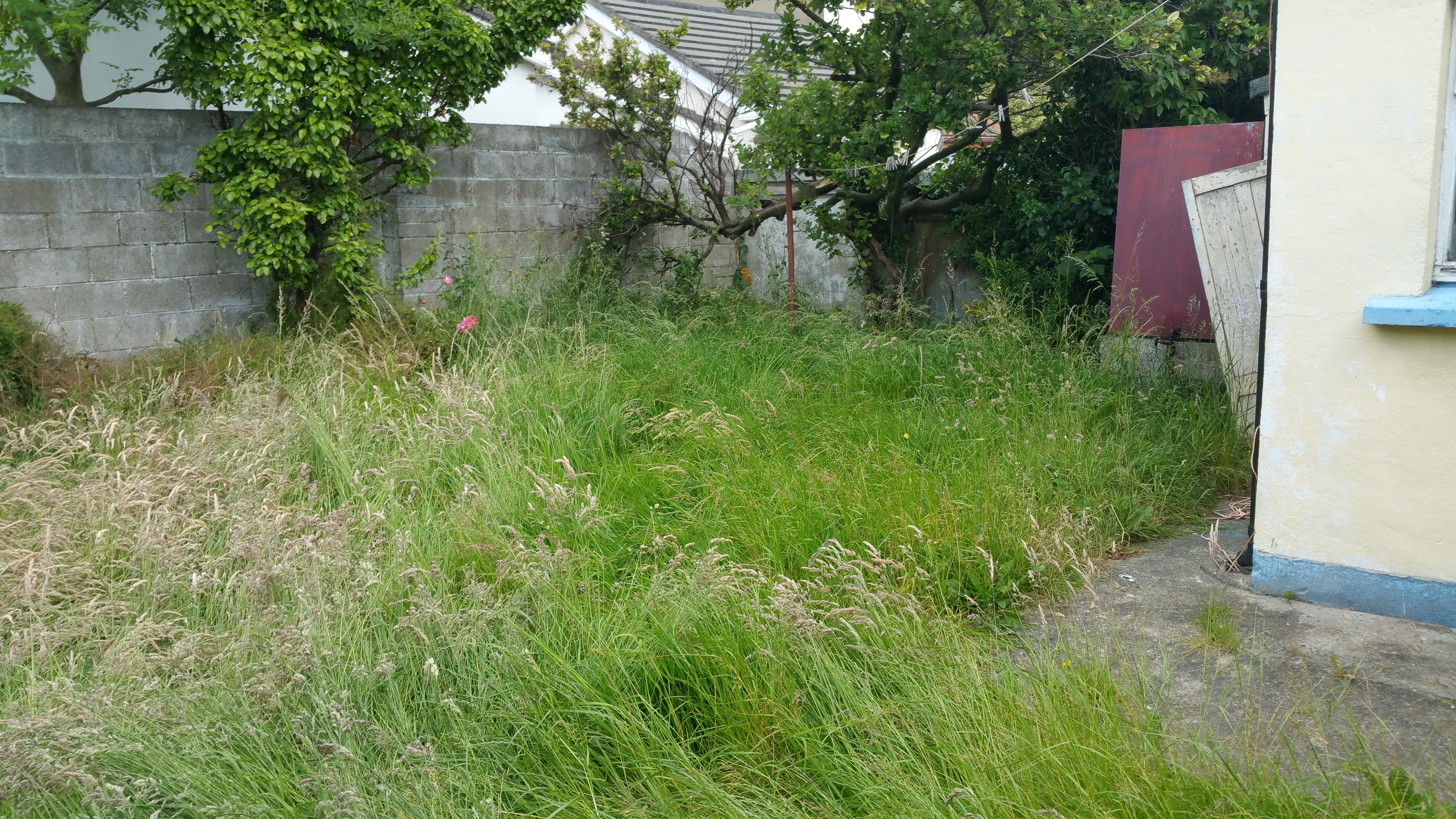 Image Result For Neat And Tidy Garden Services